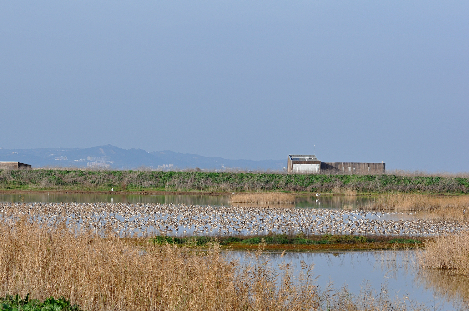 Disembarked birdwatching in the Tagus Estuary Natural Reserve