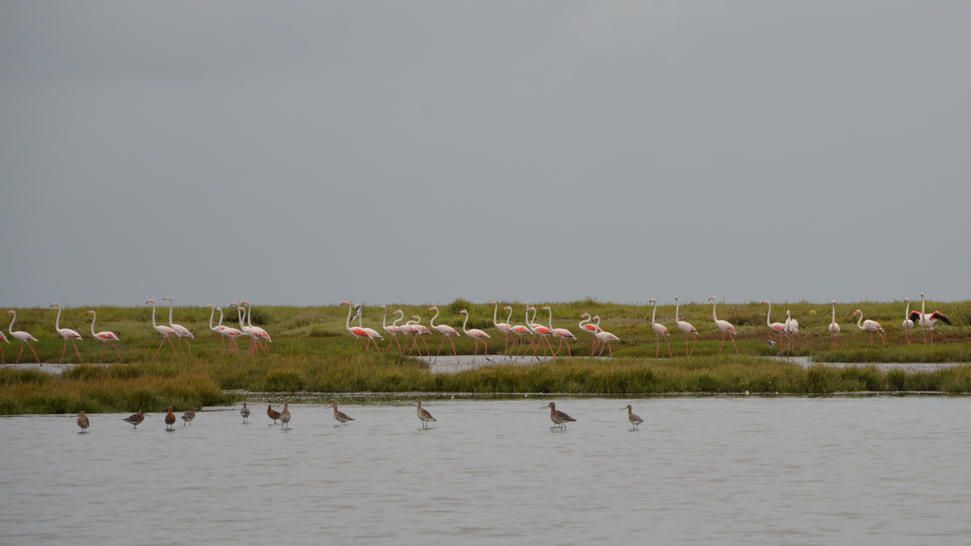 Flamingos e maçaricos na Reserva Natural do Estuário do Tejo